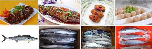 南戴河海鲜鲅鱼