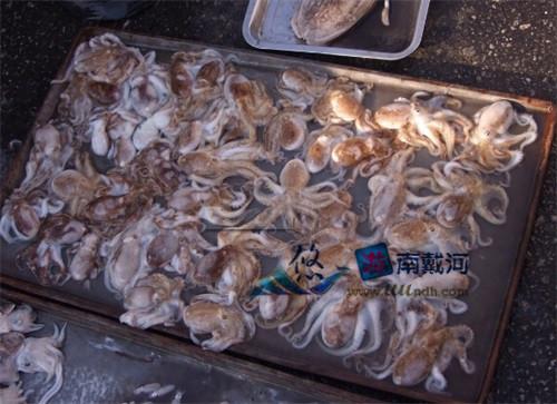 南戴河海鲜八爪鱼