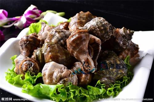 南戴河海鲜海螺