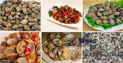 南戴河海鲜花蛤