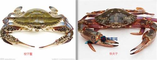 南戴河海鲜螃蟹