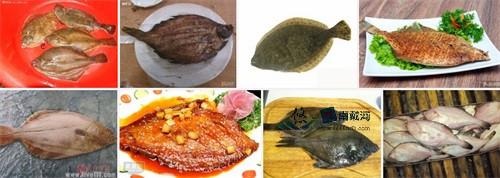 南戴河海鲜偏口鱼