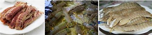 南戴河海鲜皮皮虾